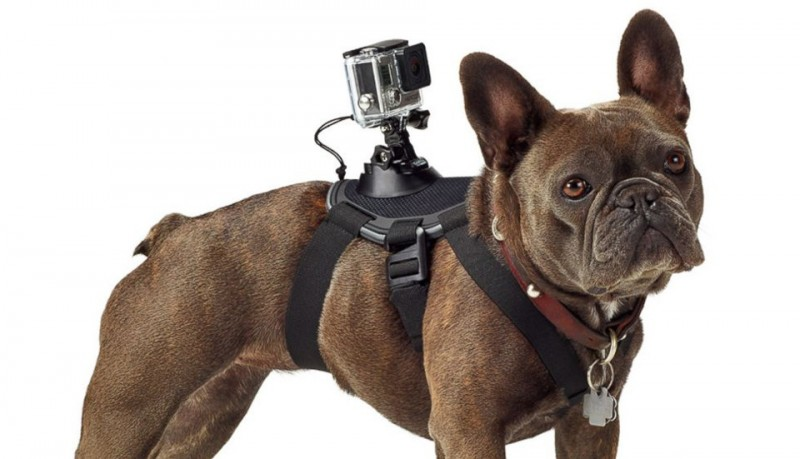 GoPro Fetch arnés para perros