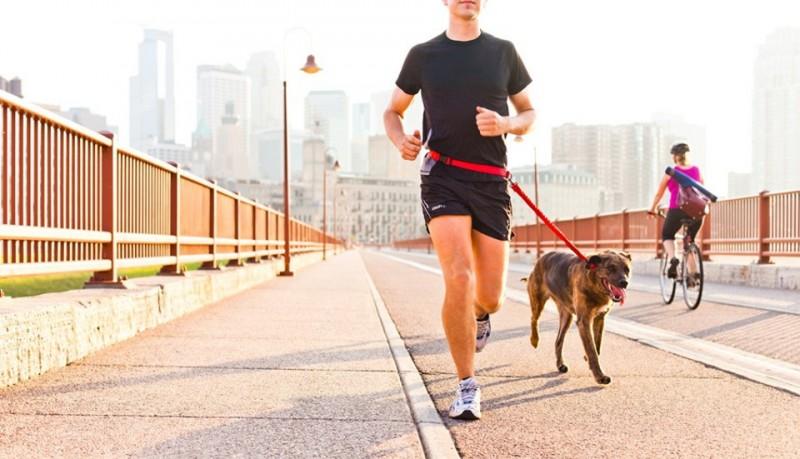 Collar para correr con el perro de Stunt Puppy
