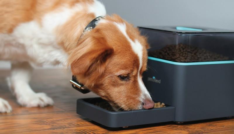 Pintofeed alimenta mascotas desde el móvil